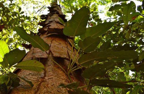 A Biofílica foi eleita a melhor desenvolvedora de projetos florestais!